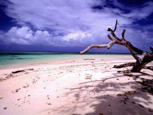 800px-Laura_beach_n_tree_(170671778)