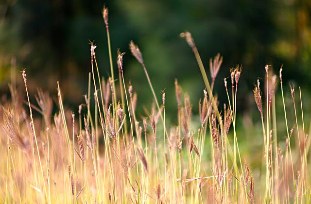 Grass-by-Nigel-Lo